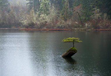 Arrosage du bonsai
