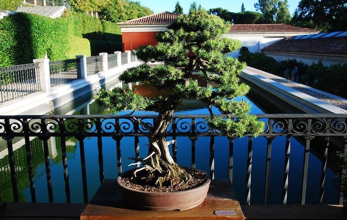 Bien entretenir un bonsai