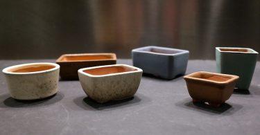 Comment choisir le pot d'un bonsai