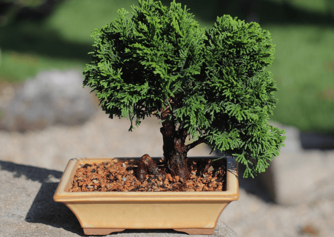Comment choisir le pot d'un bonsai
