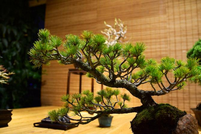 Définition du bonsai