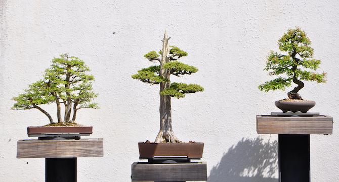 Les différents styles de bonsai