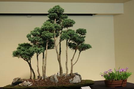 bonsai forme style forêt