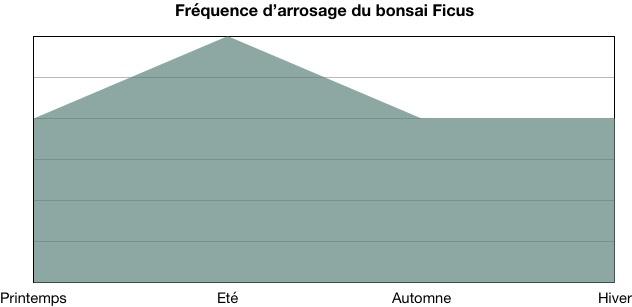 Fréquence d'arrosage du bonsai ficus