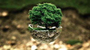 Top des fausses idées sur le bonsai