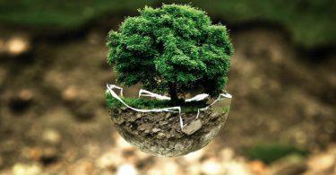 Fausses idées reçus sur les bonsai