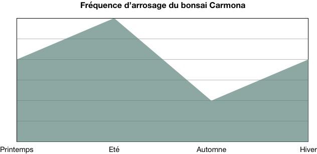 Fréquence d'arrosage bonsai Carmona (Thé de Fukien)