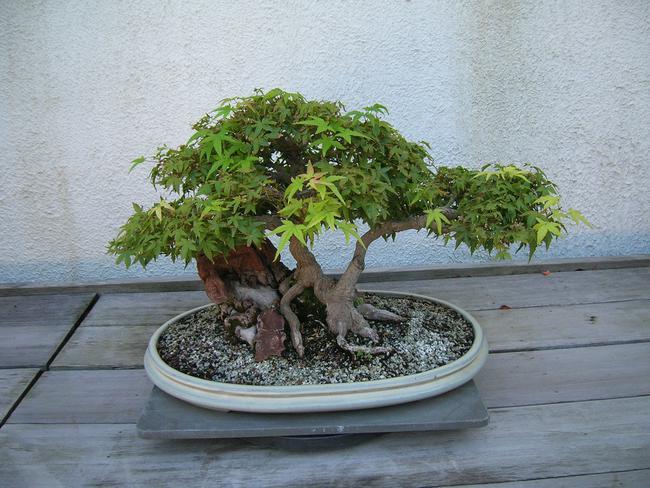 Pot à bonsai ovale