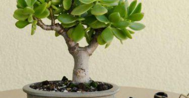 Outils d'entretien du bonsai