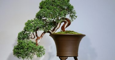 Bonsai style cascade - Kengai