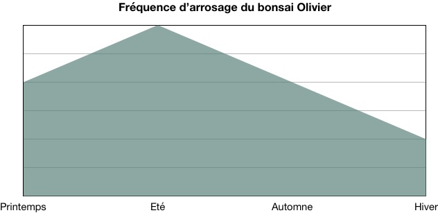 Fréquence d'arrosage du bonsai olivier