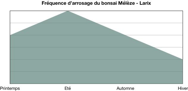Fréquence d'arrosage du bonsai Mélèze (Larix)