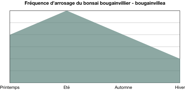 Fréquence d'arrosage bougainvillier - bougainvillea