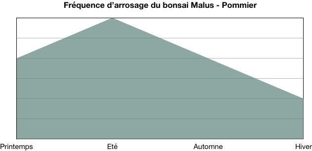 Fréquence d'arrosage du bonsai Malus - Pommier